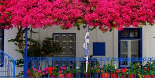Hoa, cây cảnh