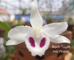 Rất nhiều mặt hoa lan 5 cánh trắng đột biến đẹp lung linh đều có tại Vuonhoagiadinh.com, lan đột biến 5 cánh trắng đang được tìm kiếm nhiều nhất hiện nay