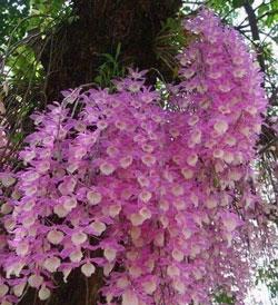 Vườn lan gia đình vừa về lô lan thiên cung lữ bố hàng đài chậu cây giống hàng đẹp nhiều ngọn